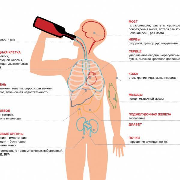 Как алкоголизм влияет на организм - Реабилитационный центр Время жить! - Реабилитация алко и наркозависимых